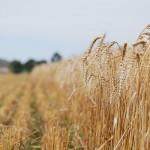 El Gobierno pretende fomentar la utilización de los biocarburantes y fomentar la eficiencia energética